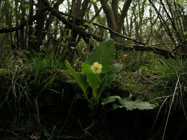 Hayley Wood Nature Reserve
