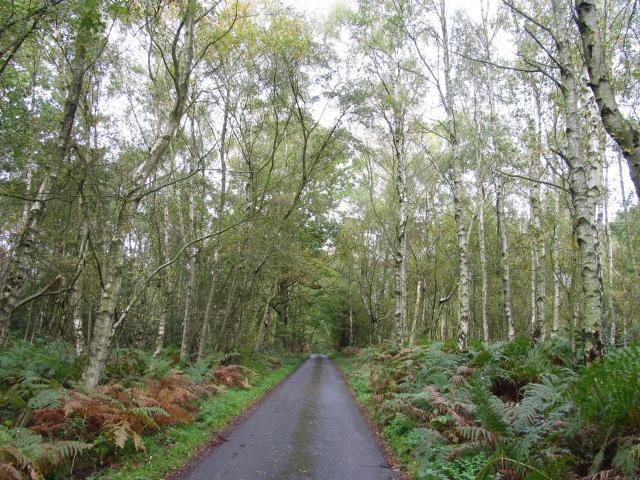 Lane in Bradfield Common