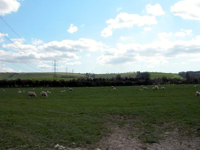 Sheep Farming at the foot of the South Downs