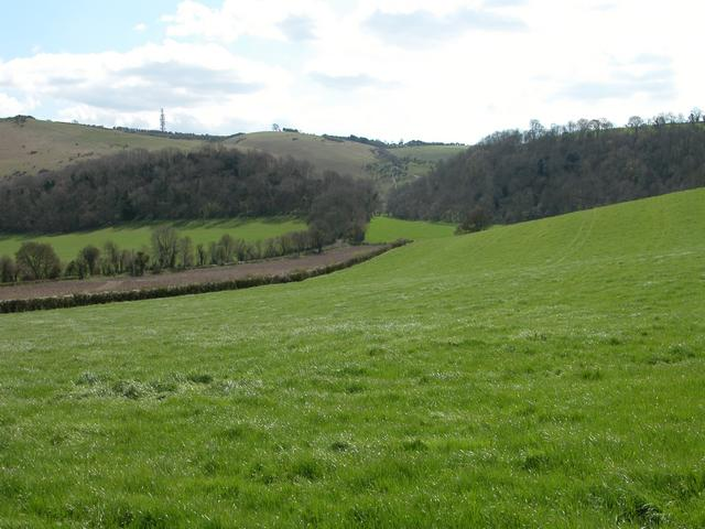 The Nore and Pollard Beech at the foot of the South Downs