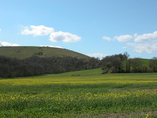 Rakefield Hanger at the foot of Butser Hill