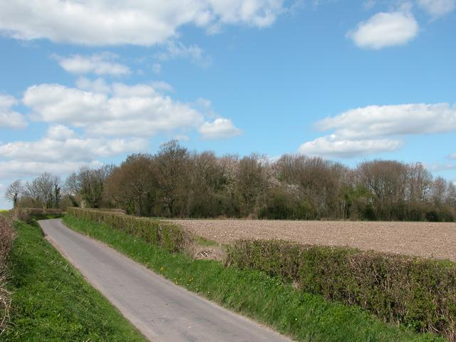 BoPeep Copse near Weston