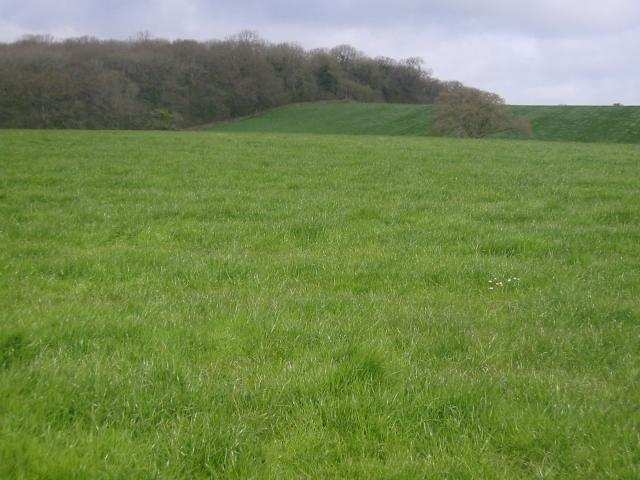 North Side Wood, Templecombe