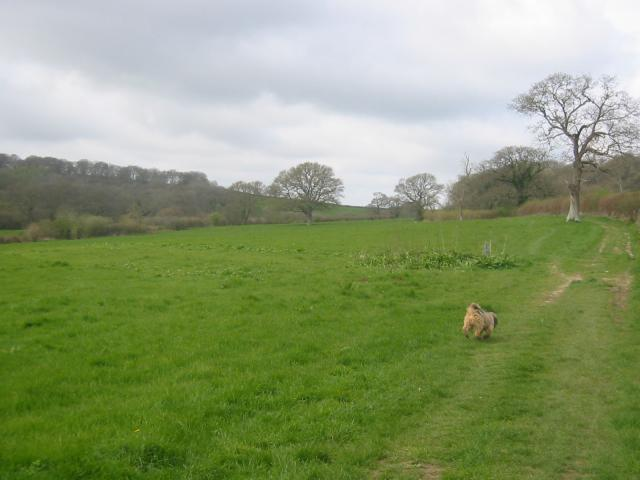 Approaching Stowell Wood