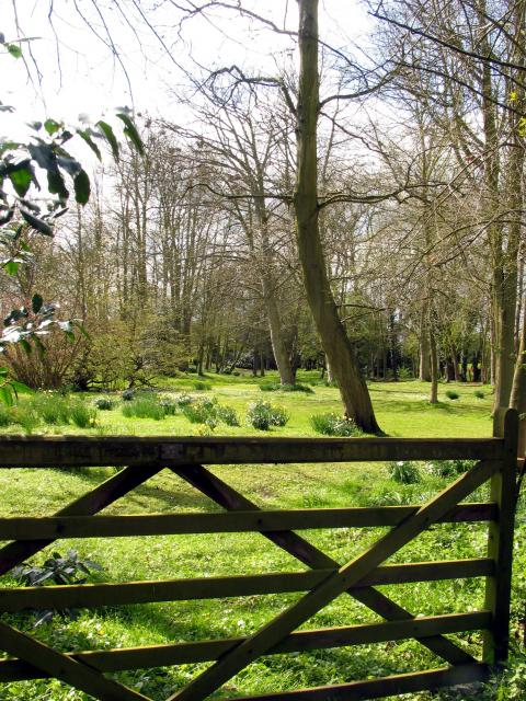Woodland Garden: Stanford Dingley