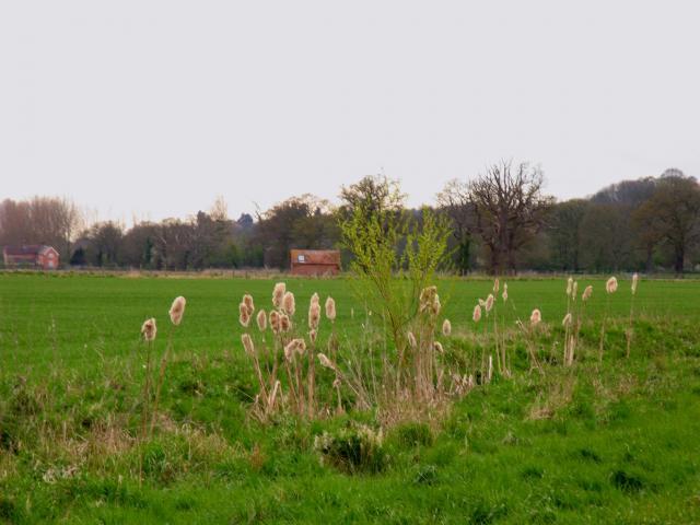 Stream and Rushes: Beenham area