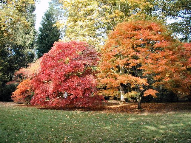 Acer Glade at Westonbirt Arboretum
