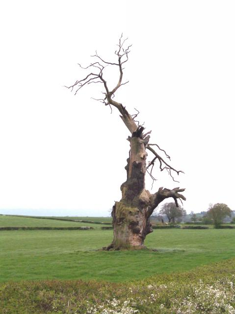 """That Tree!"""