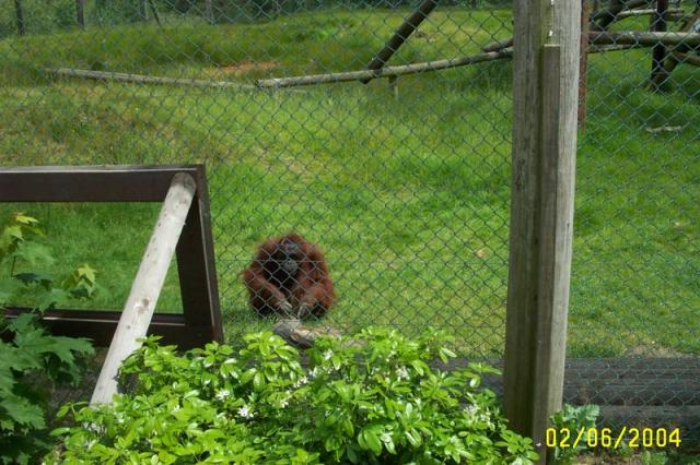 Monkeyworld in Dorset