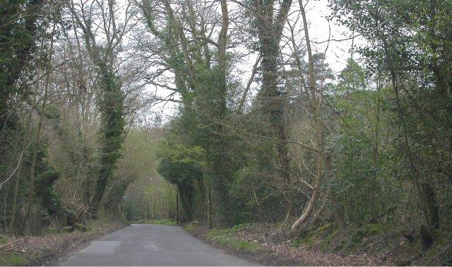 Polecat Hill