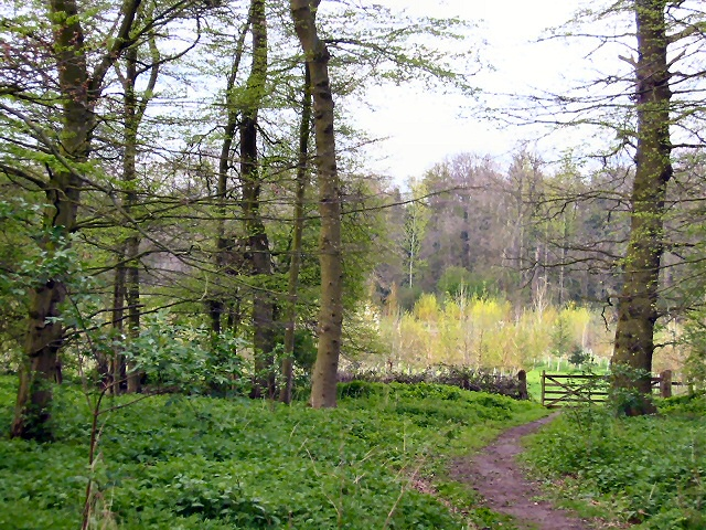 Wymondley Wood