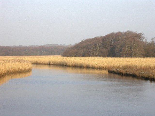 Reed beds, Lymington River