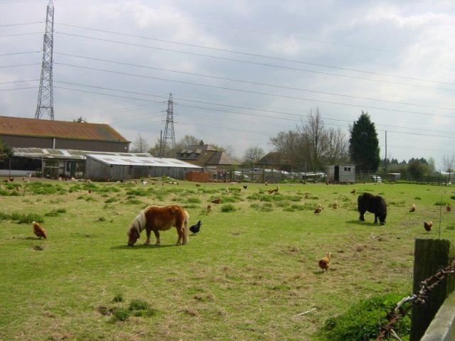 Featherbed Farmyard