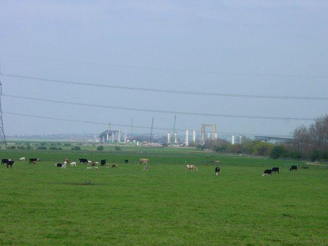 Meadow near Sheppey bridge construction site