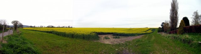 Rapeseed Farmland