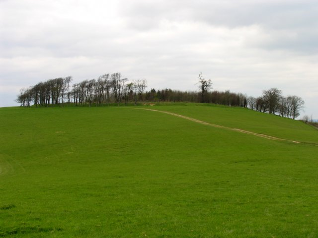 Chanctonbury Ring Fort: Off the South Downs Way