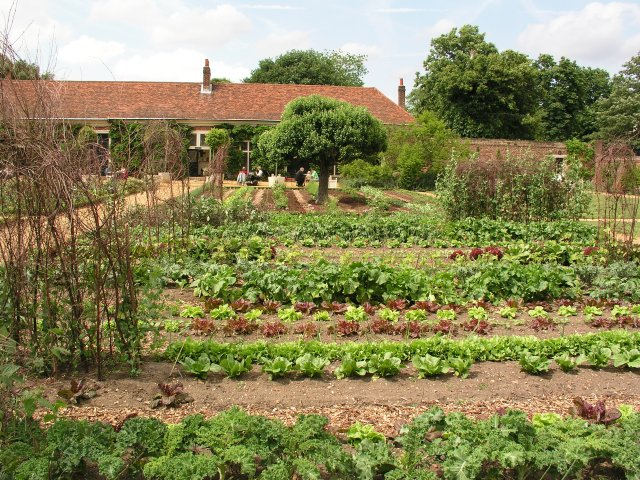 Vegetable garden at Ham House Estate