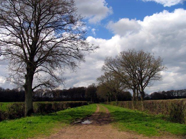 Footpath off Violet Lane