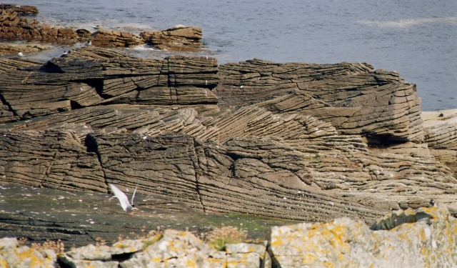 Cross-bedding on Bressay