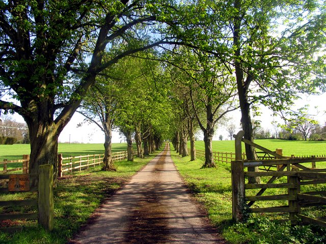 Private Road to Pitt House Farm
