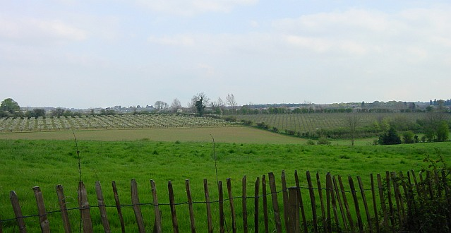 Orchards below Penfield Lane