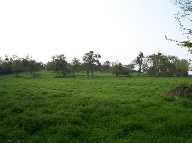 Old Cider Orchard, Woodend Farm, Twyning