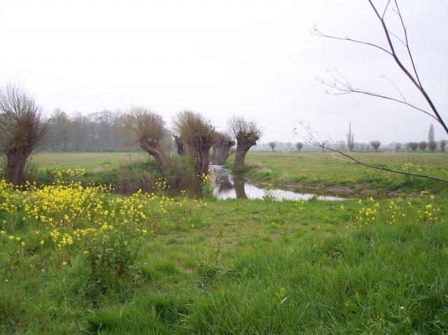 Pollarded Trees, Longdon Marsh