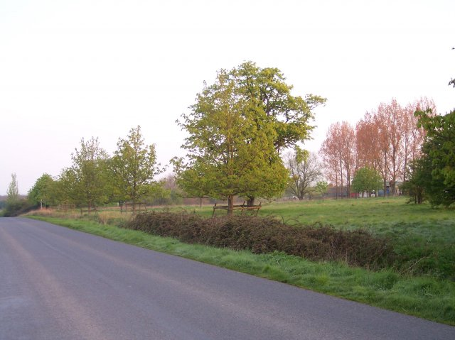 Unfenced Common land, Twyning Green