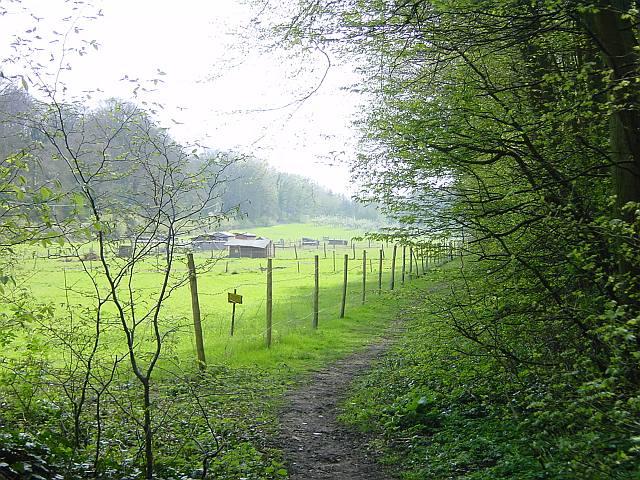 Footpath beside Gorham Wood