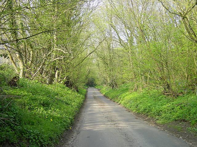 Hazel Street Road