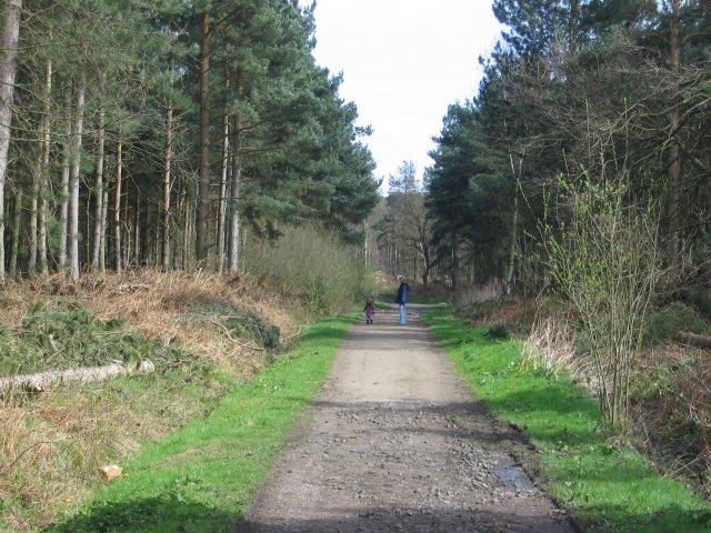 Allerthorpe Wood