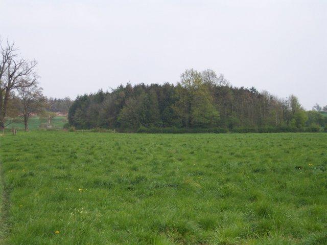 Square Plantation