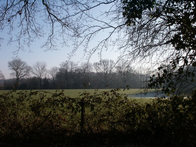 View across the fields towards woodland
