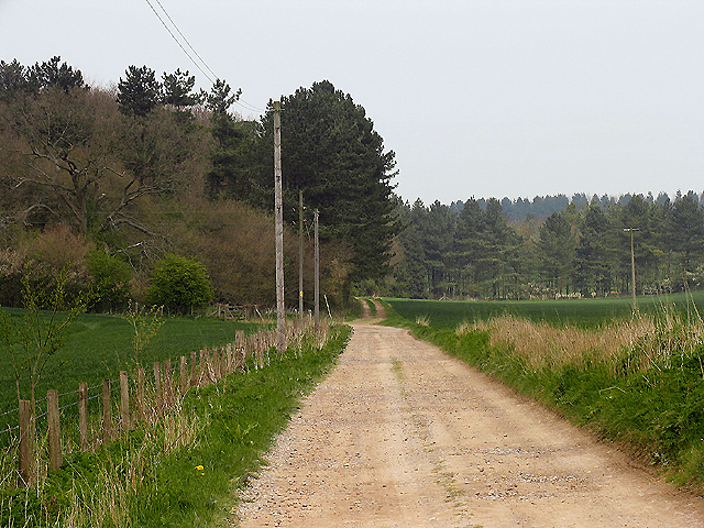Wickslett Copse near Catmore Farm