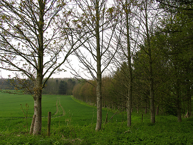 Copse near Catmore Farm