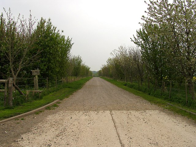 Avenue to Folly Farm