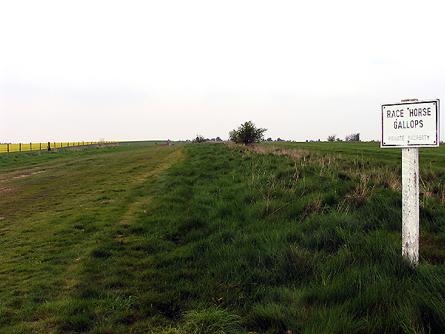 Race Horse Gallops: West Ilsley