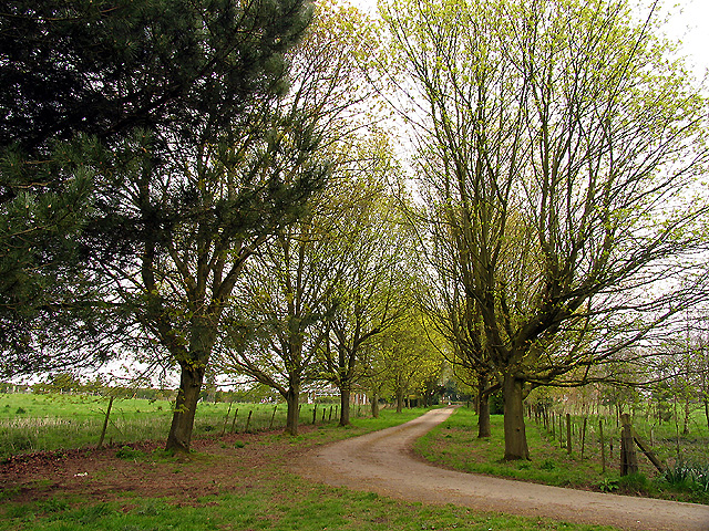 Lane leading to Coombe Lodge