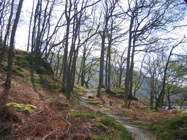 West Highland Way and oak woods