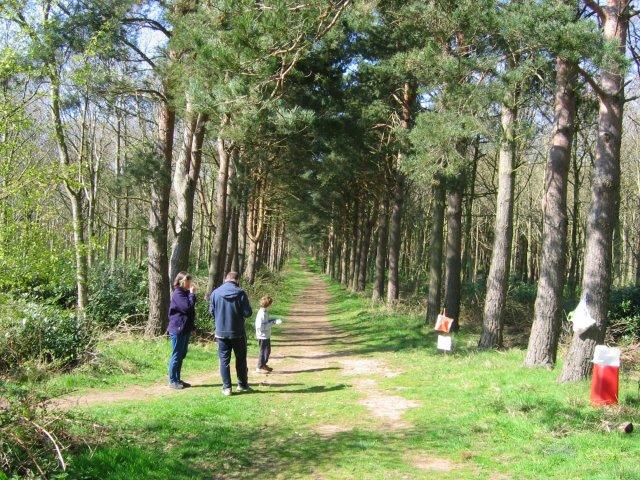 Orienteering in Binning Wood.