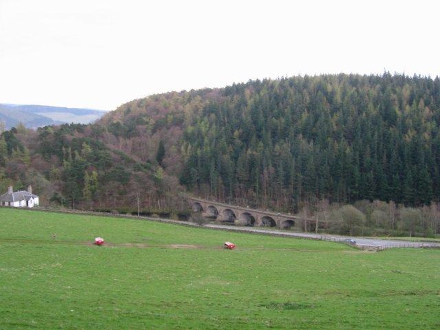 Neidpath Viaduct and South Park Wood