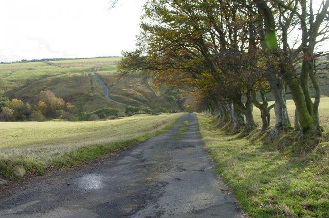 Windswept hawthorn hedge, Ridley Moor
