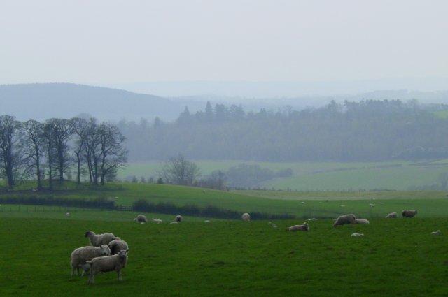 Farmland at Styford