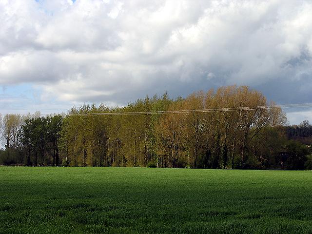 Trees at River Barn Farm: Bucklebury
