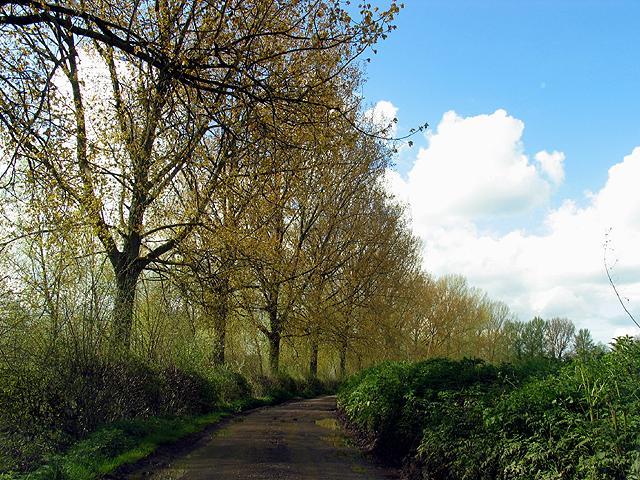 Treelined Country Road to Frilsham