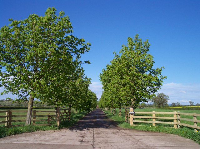The avenue to Lawn Farm