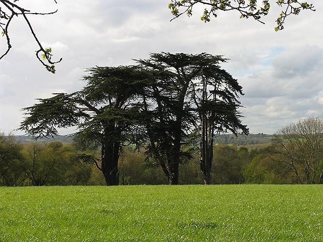 Trees: Padworth