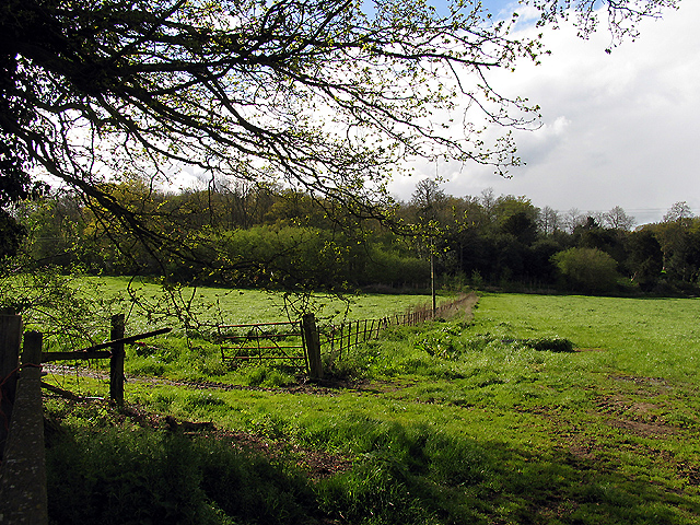 Clay's Copse nr Englefield Estate