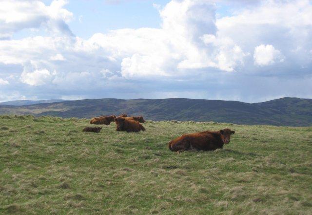 Rough grazing, Hartwoodmyres.