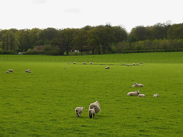Rushall Manor Farm